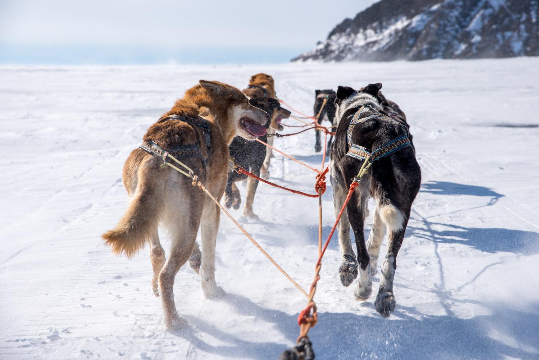 Baikal 236 of 54